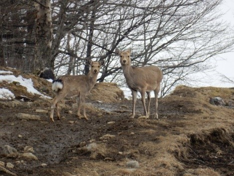 人間慣れした鹿が何頭もいた。