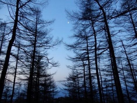 朝になる瞬間の空はいつも綺麗である。