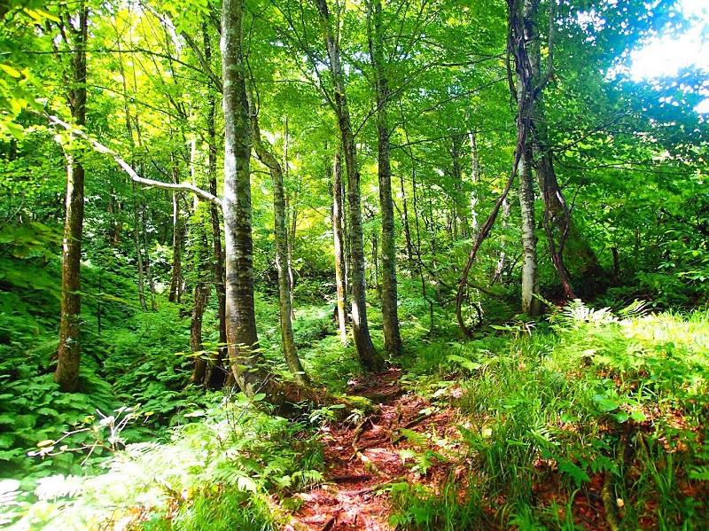 樹林帯に差し込む優しい光を浴びながら、眠たくなりそうな下山中の一枚。
