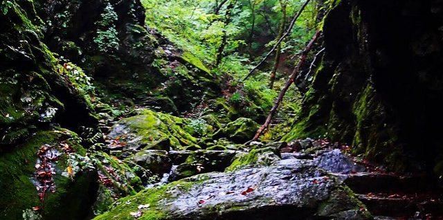 ロックガーデン。岩の何とも言えない圧力を感じる。
